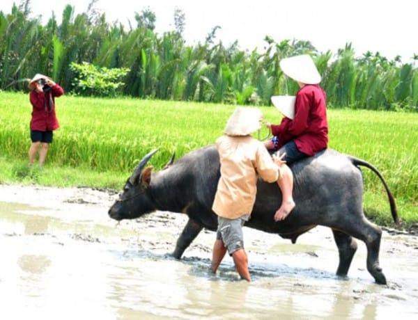 Bay Mau Coconut Village buffola